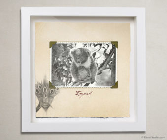 Valentine Koalas Shadow Box 10-by-10 Inches 18