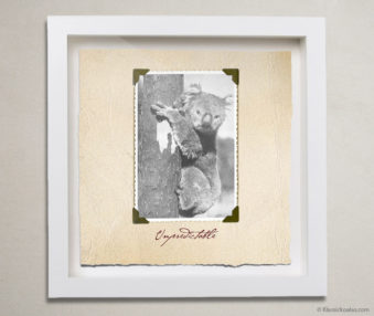 Valentine Koalas Shadow Box 10-by-10 Inches 19
