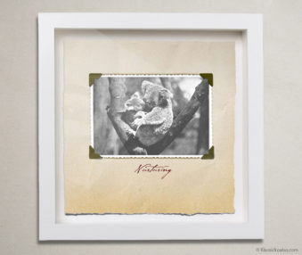 Valentine Koalas Shadow Box 10-by-10 Inches 22