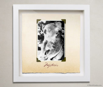 Valentine Koalas Shadow Box 10-by-10 Inches 28