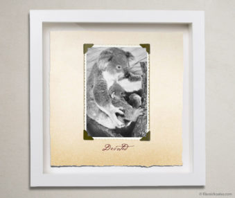 Valentine Koalas Shadow Box 10-by-10 Inches 8